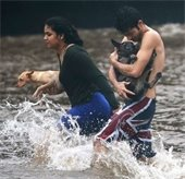 Residents of HI carrying dogs in flooding neeghborhood