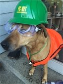 Dog wearing PC NET hat