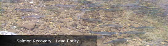 Salmon Recovery - Lead Entity Banner