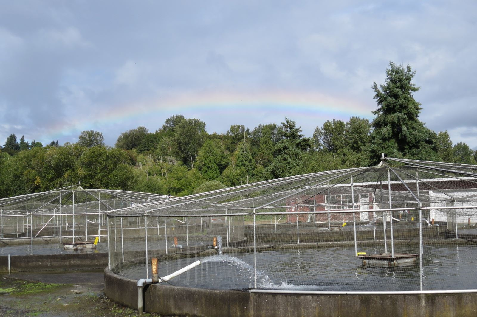 old round concrete ponds with nets used for raising juvenile salmonids outside, with rainbow in background