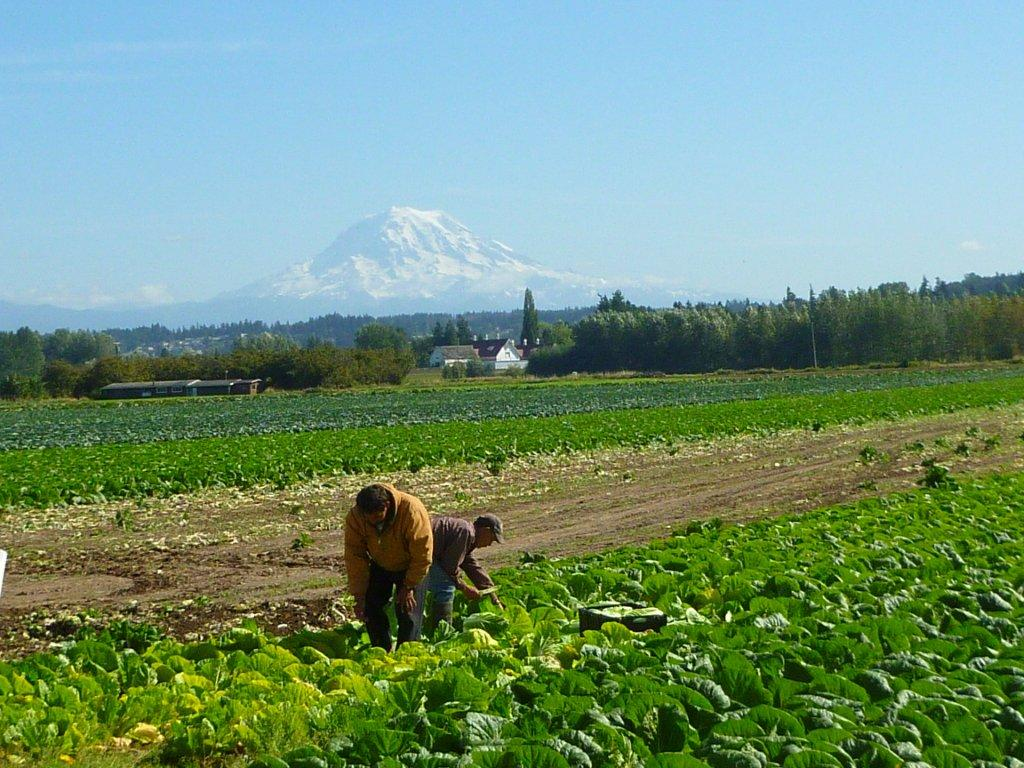Orting valley picture 1.jpg